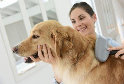 Mobile dog grooming miami beach